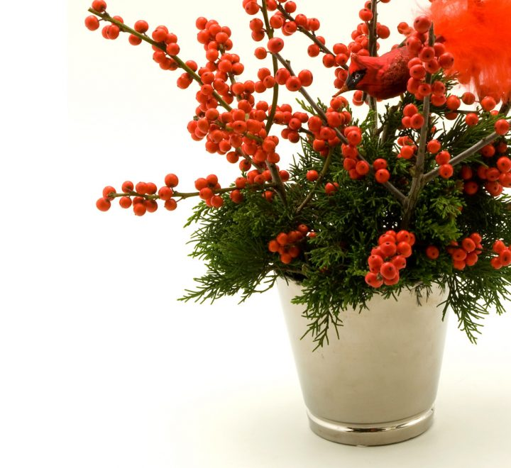 flowers, Christmas, Ilex berries