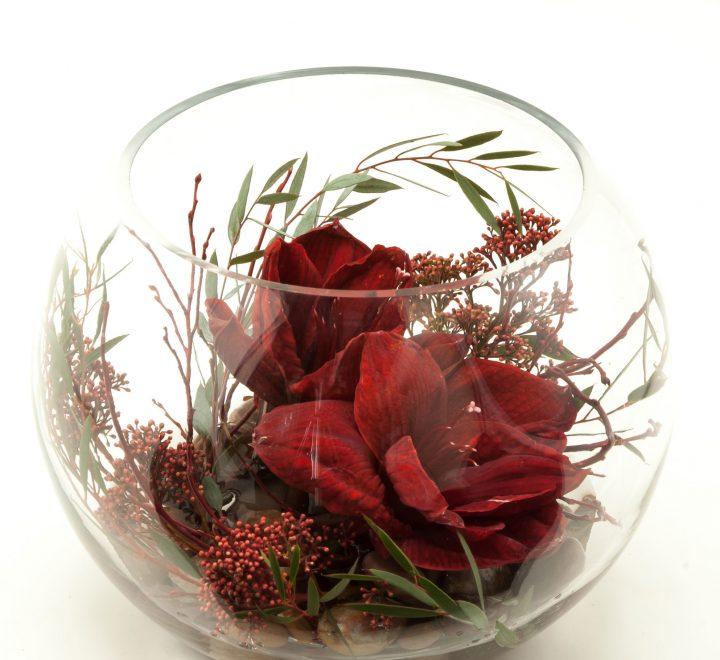 flowers, amaryllis