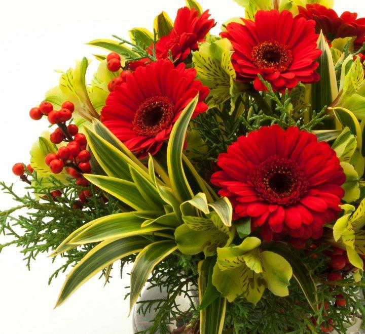 flowers, ilex berries, gerberas & alstroemaria