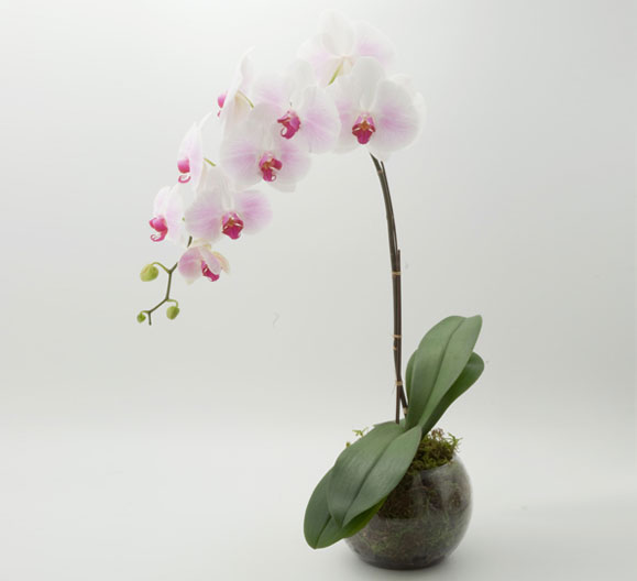 valentines, flowers, the artworks, love, orchid