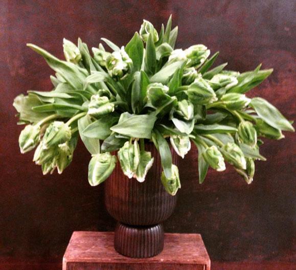 tulips, Christmas, KleinReid